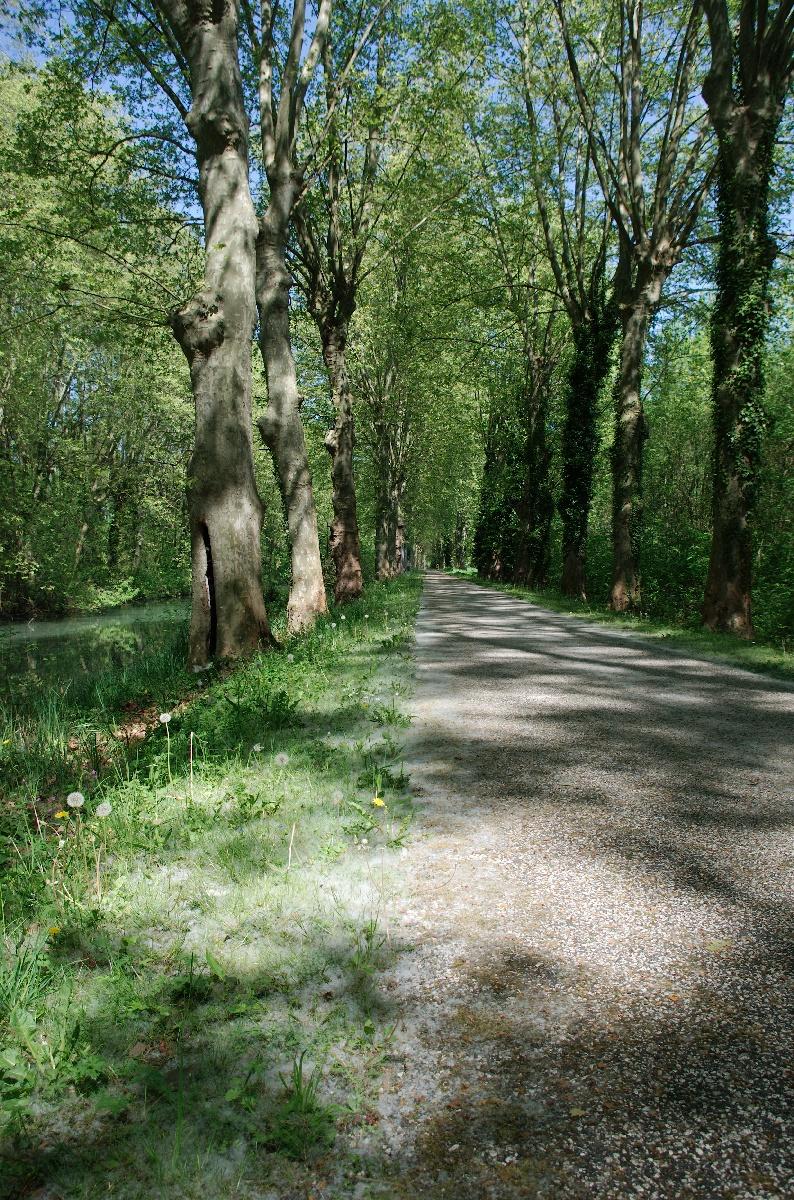 Les graines des arbres crééent une ambiance féérique