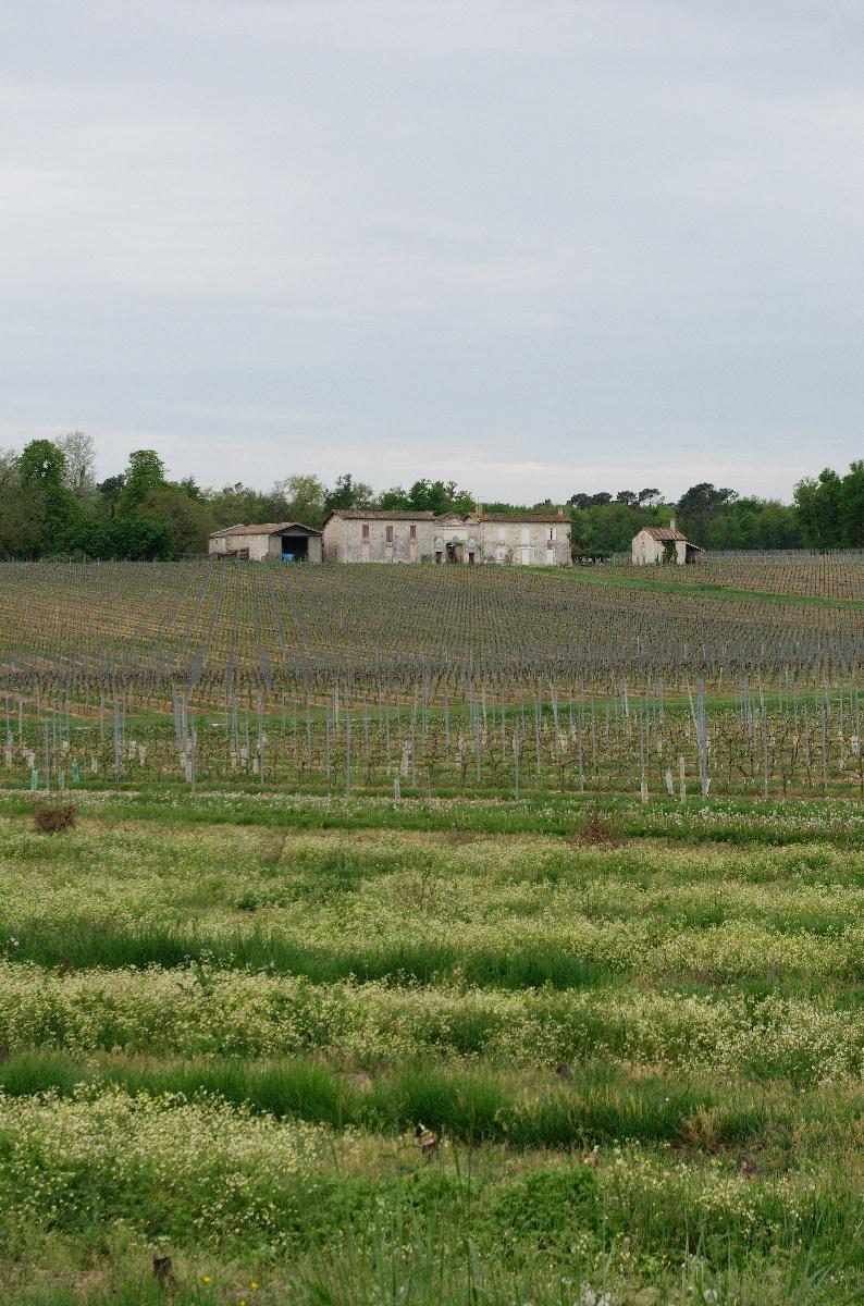 La piste Lapébie passe au milieu des vignes