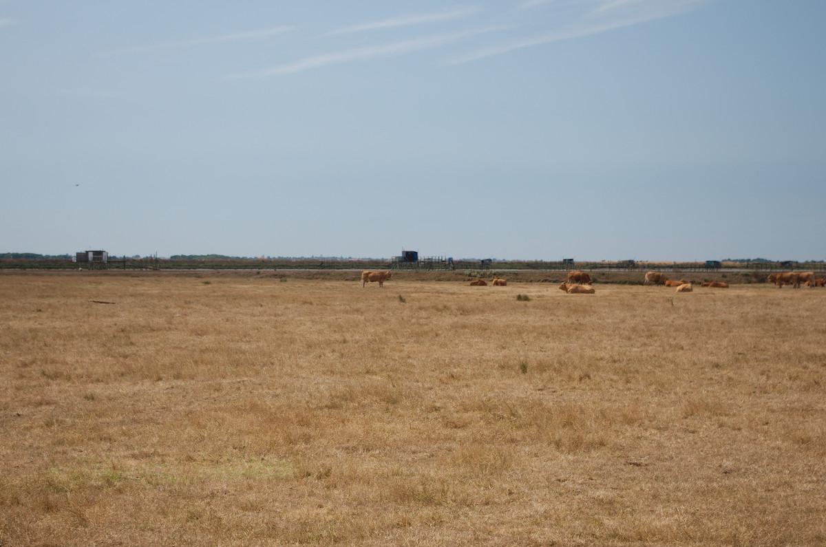 Le marais desseché près de Rochefort