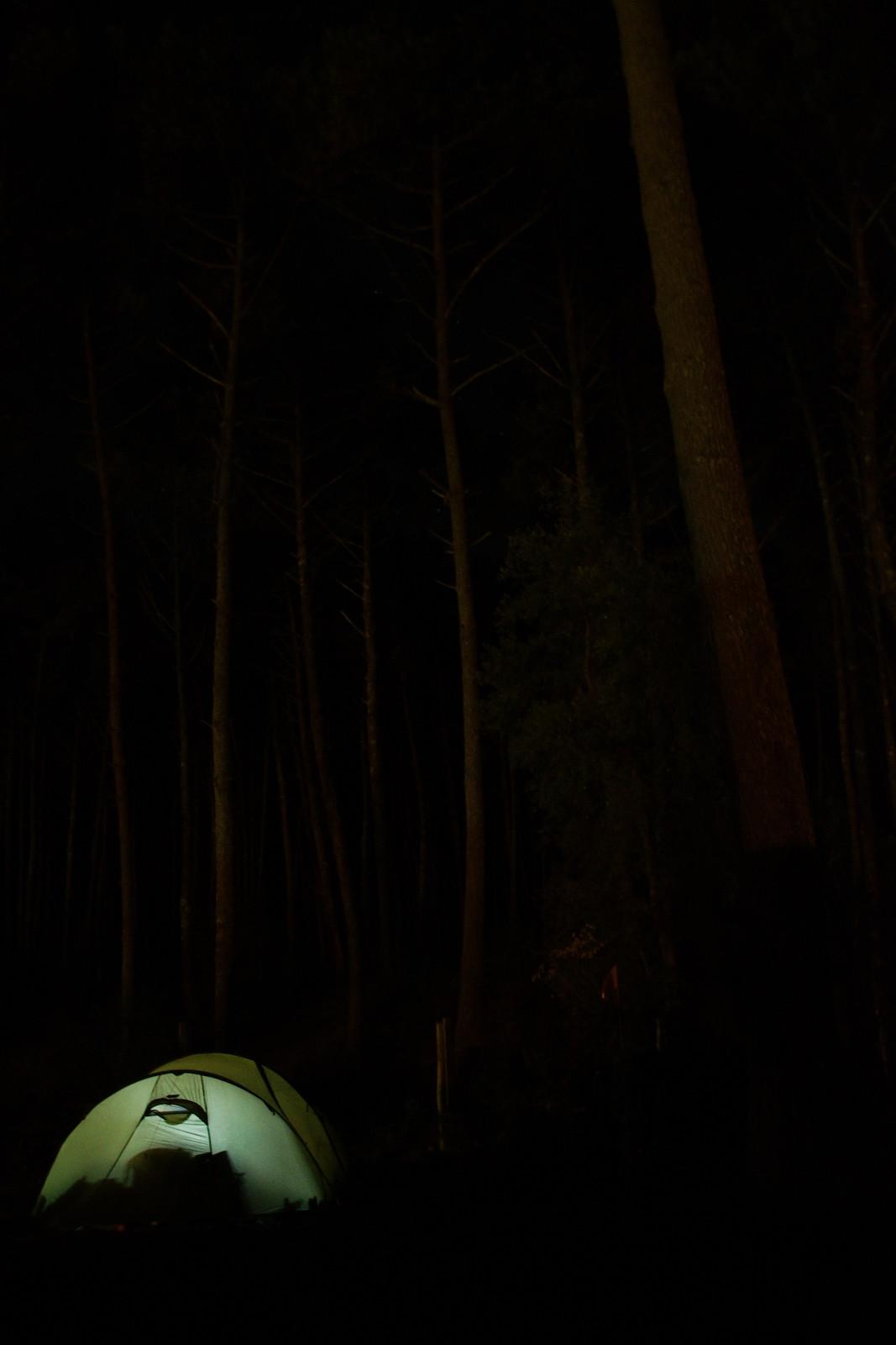 Une nuit au pied des pins