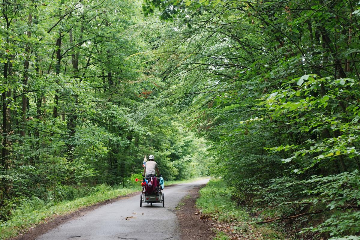 À travers la forêt d'Haguenau