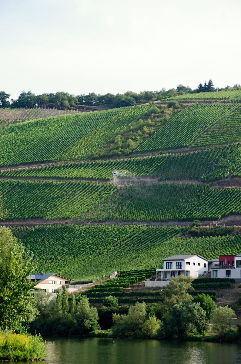Les bons vins de Moselle !